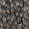 ミツバチの越冬準備