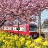 まぐろきっぷで三浦海岸の河津桜と京急電鉄