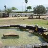 ガリラヤ湖