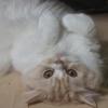 モジモジ校長ともふもふ猫。