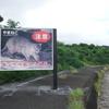 ちょっと道草 210407 写真で Go to西表島(12  イリオモテヤマネコ プロ写真