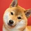 【保存版】飼うならどれ?家庭で飼いやすいペットの徹底比較10種!