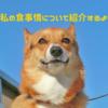 """【コーギーの食事情】ノアちゃんはどんな""""ドックフード&おやつ""""を食べてるの?!"""