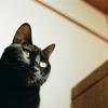 黒猫こんぶに強烈キックをお見舞いされた。