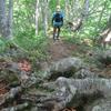 木の根の道を歩く。