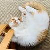 【愛猫家のレビュー】「いぬ・ねこのきもち」のトークイベント「いぬ・ねこのナゾだらけの行動」