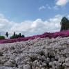 伊豆ヶ岳に登って秩父で芝桜を見にいった山旅