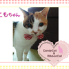 猫ちゃんのお写真紹介.第23段