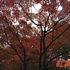 【紅葉】SFC修行⑨東京の昭和記念公園に行く時期