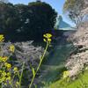 春爛漫  --- 九段の坂、界隈 ---
