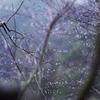 『青梅雨』 著:永井龍男
