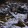 冬至の東熊山遊山 眠る森