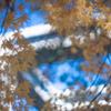 初冬の太閤山ランド:12月から3月まで駐車料金無料です♪