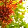 秋の長雨でストレスパワーを溜めることが必要な理由