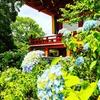 京都ぶらり 紫陽花お薦めスポット
