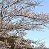 I💛我孫子 我孫子散策 我孫子の桜 手賀沼公園