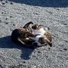 猫姉妹とか 絹サヤとか