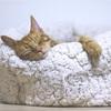【猫】買い物から戻ってきたら家のドアの前で野良猫がかなり寛いでいた話。