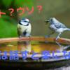 【悩みは話すと楽になるってほんと?】話す効果について考える。