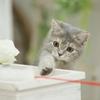 【英語のお勉強】猫にまつわる英単語😸