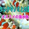 カクレクマノミとの混泳【オススメの海水魚】