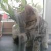 ドイツの猫🐈グッズ その2(お遊び用品)