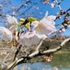 大倉山からバスで三ツ池公園へ行ってきたよ