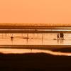 高美湿地の夕陽 & 尾鷲花火大会