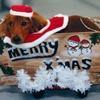 クリスマス・フェスティバル 5