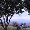 今朝は金比羅公園の桜偵察からスタート