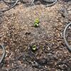 発芽しはじめた家庭菜園
