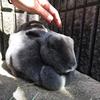 五月山動物園でまった~りっと、プラネタリウムもあるよ~