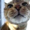 11月前半の #ねこ #cat #猫 どらやきちゃんB