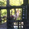 徳島ドローン撮影:かずら橋は足ガクガク間違いなしッ 混まない早朝に行って来た