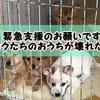 【ご協力のお願い】台風で動物愛護団体エンジェルズの犬舎が崩壊!