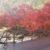 籾の運搬する途中の紅葉の名所です!綺麗ですね♪