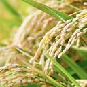 秋歌 占い収穫
