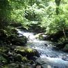 2011.6.4 三ヶ瀬川