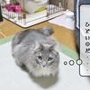 猫の道具 ~むくとおもちゃ~