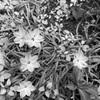 今日の2枚目 庭の花より
