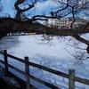 冬の高松の池と白鳥。