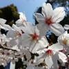 一宮駅と桜の美しい真清田神社を半日散歩(一宮市)