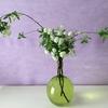 花いっぱいのコデマリ