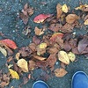 そこらへん秋