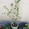 冬越しで弱ってしまった観葉植物