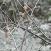 野鳥がいっぱい…明治神宮探鳥会!