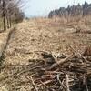 薪ストーブ始生代101 新しい現場(六本木ヒルズ)で細めの原木や枝を運ぶ。