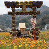 西伊豆の松崎町「田んぼをつかった花畑」2020.3.19