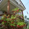玄関先を飾る花達