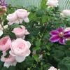 暑い中で庭仕事